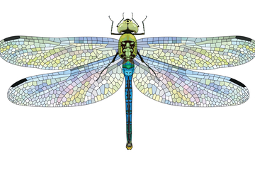 Dragonfly: 500+ staff sign open letter for Google to drop new Chinese search engine