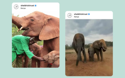 Raising Funds to Protect Elephants in East Africa